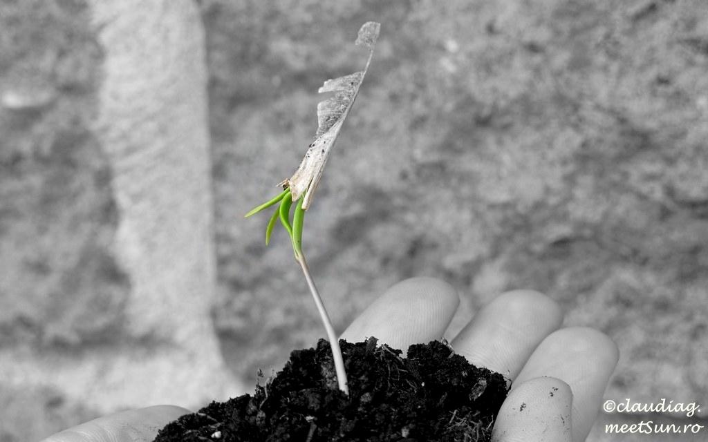 o noua planta, o noua viata