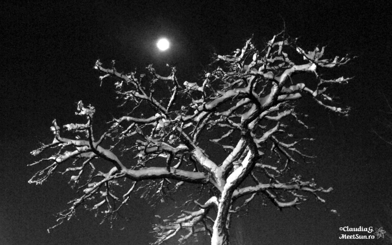 copacul gol sub luna plina