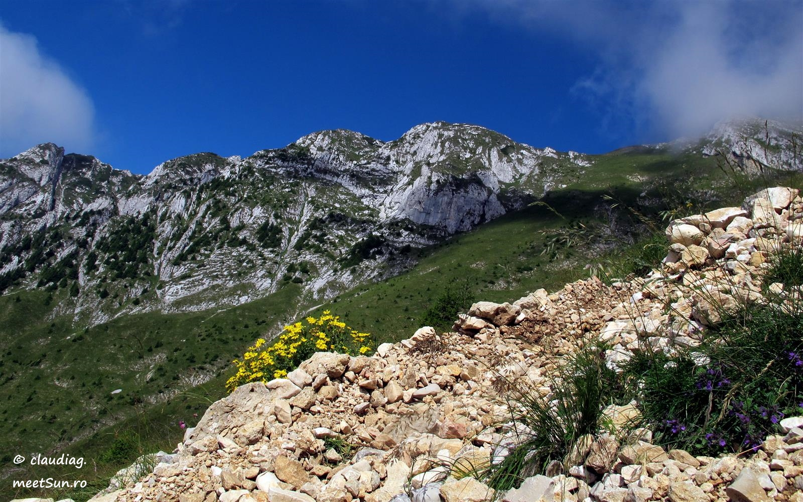 flori de munte, creste de Crai