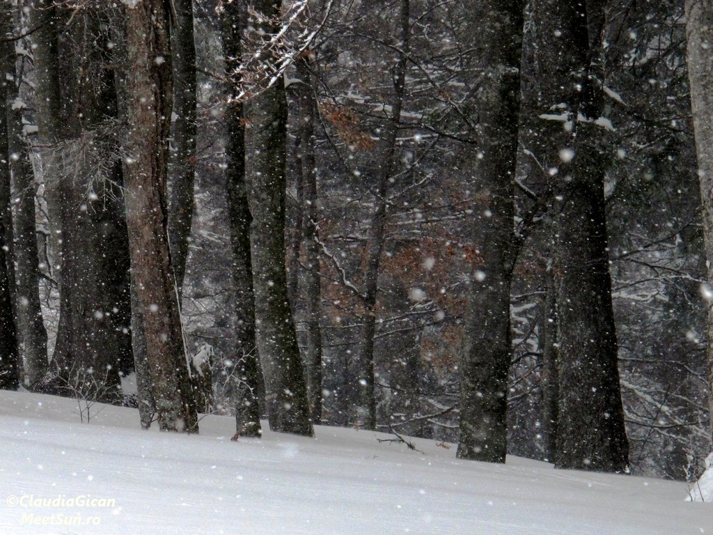 Baiului-Tura iarna-1672