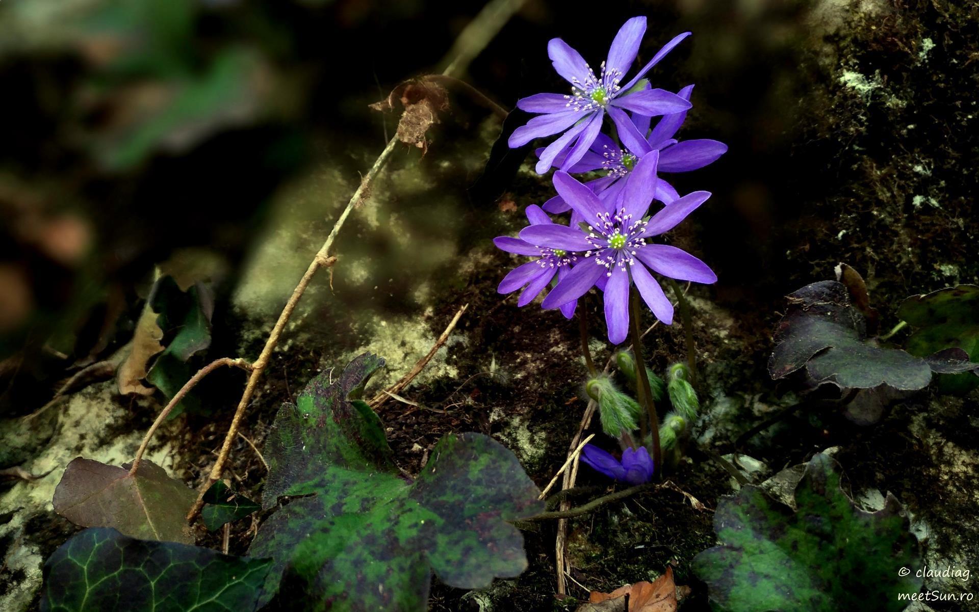 flori-de-primavara-tampa-5