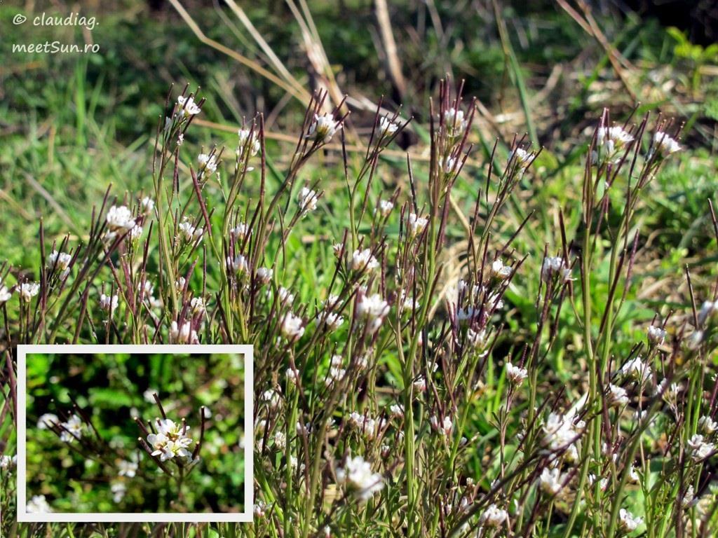 flori-albe-001.jpg