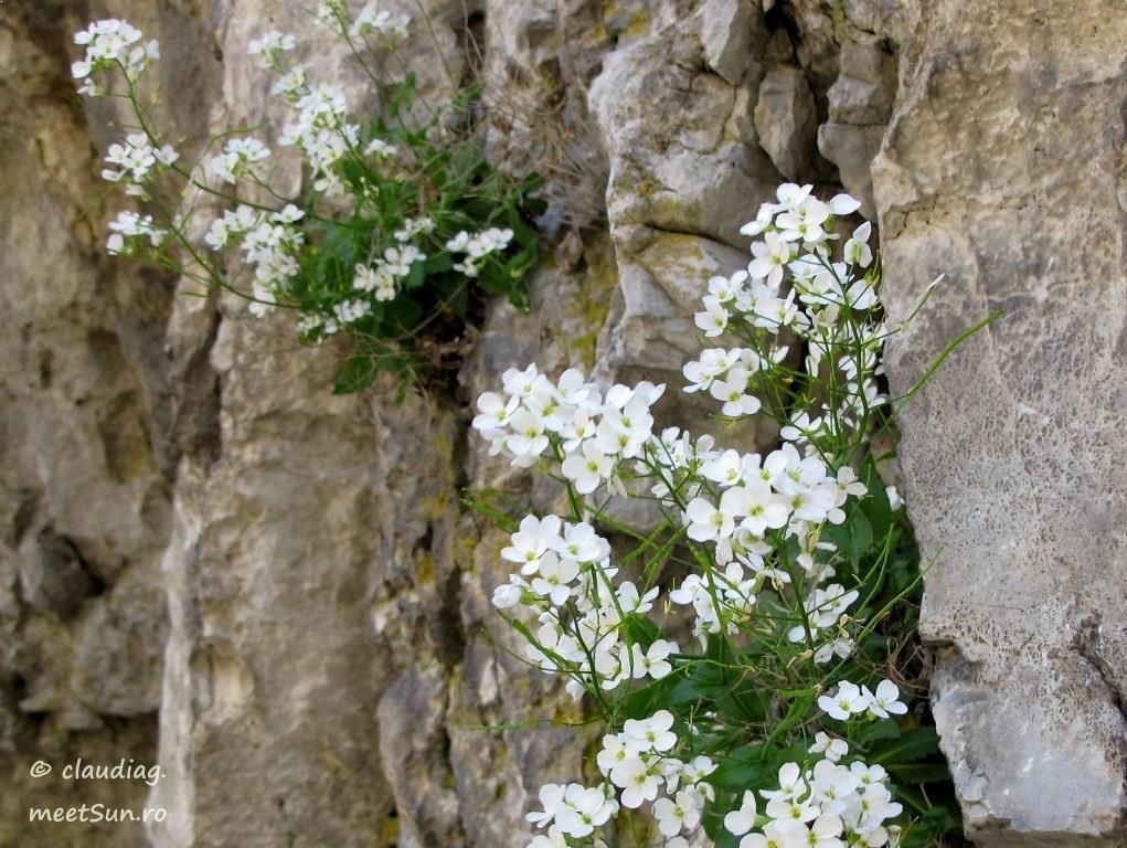 flori-albe-029.jpg