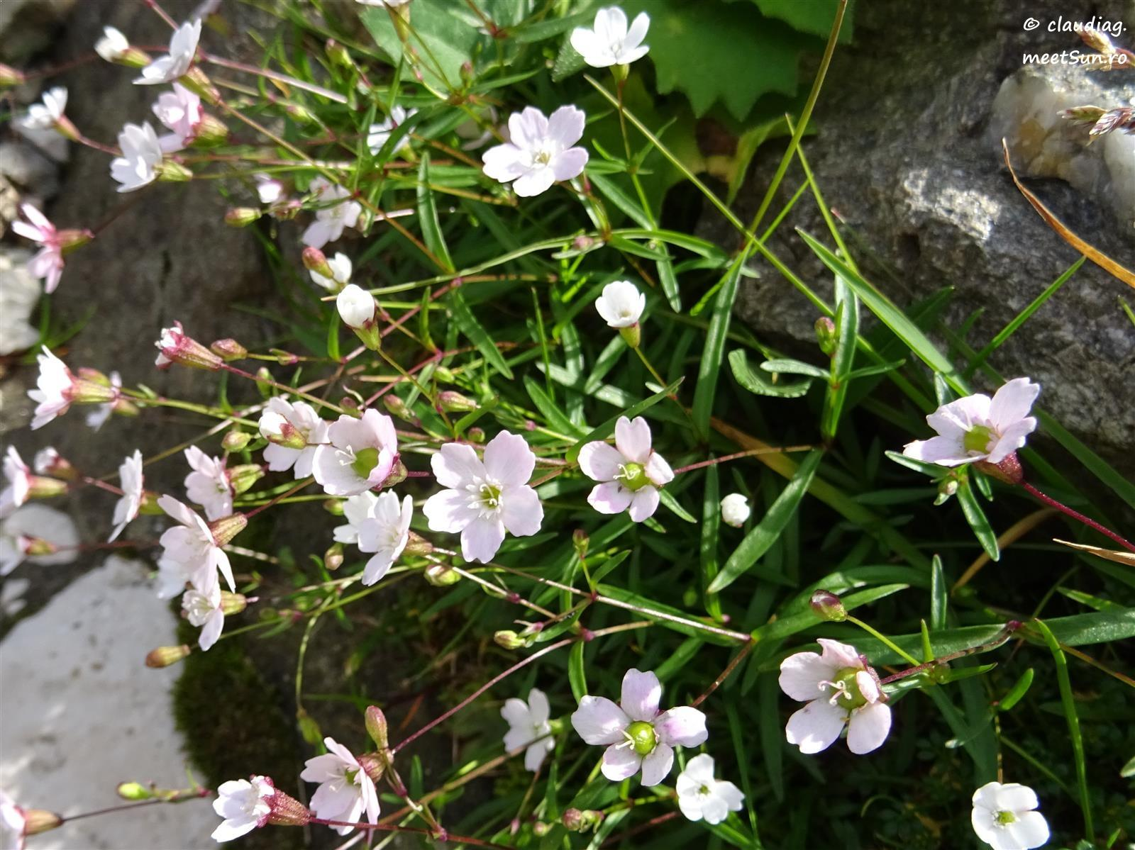 flori-albe-074.jpg