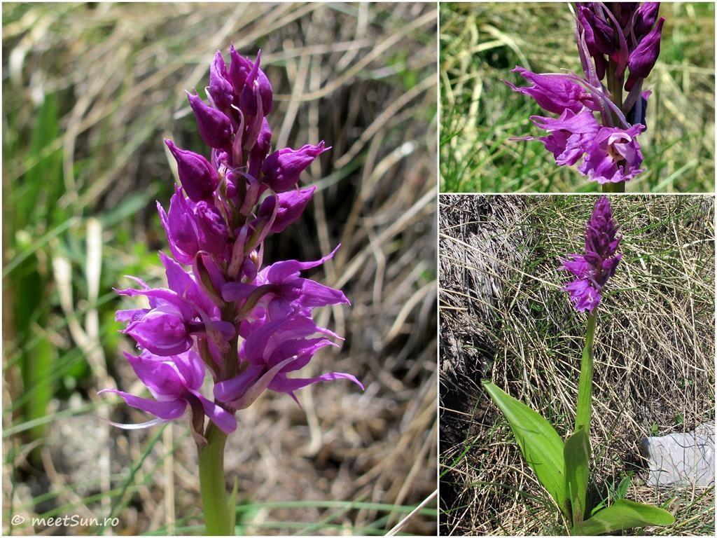 flori-mov-013-orhidee