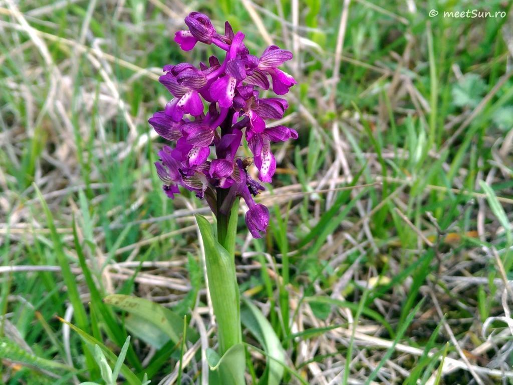 flori-mov-014-orhidee