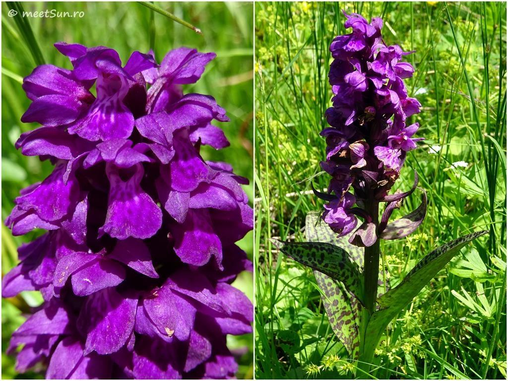 flori-mov-015-orhidee