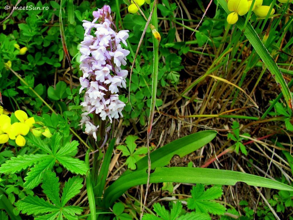 flori-mov-017-orhidee