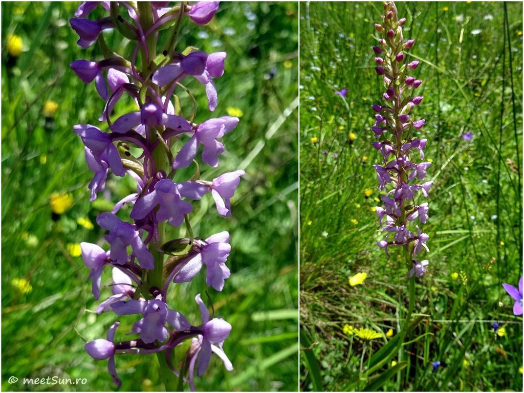 flori-mov-018-orhidee