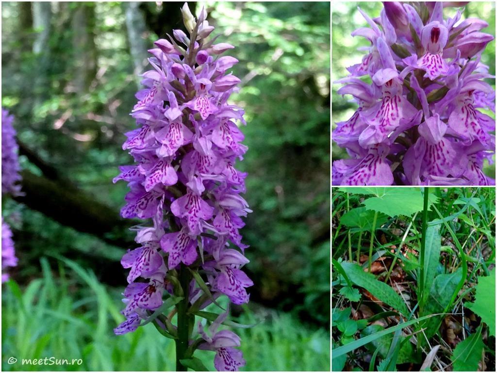flori-mov-019-orhidee