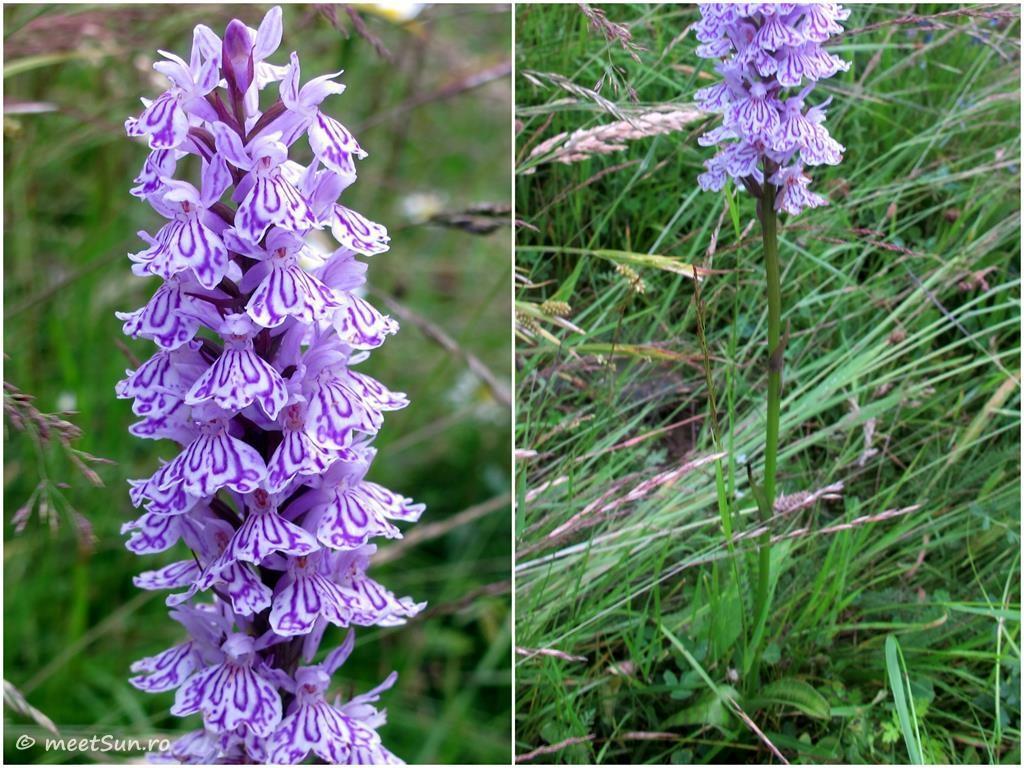 flori-mov-020-orhidee