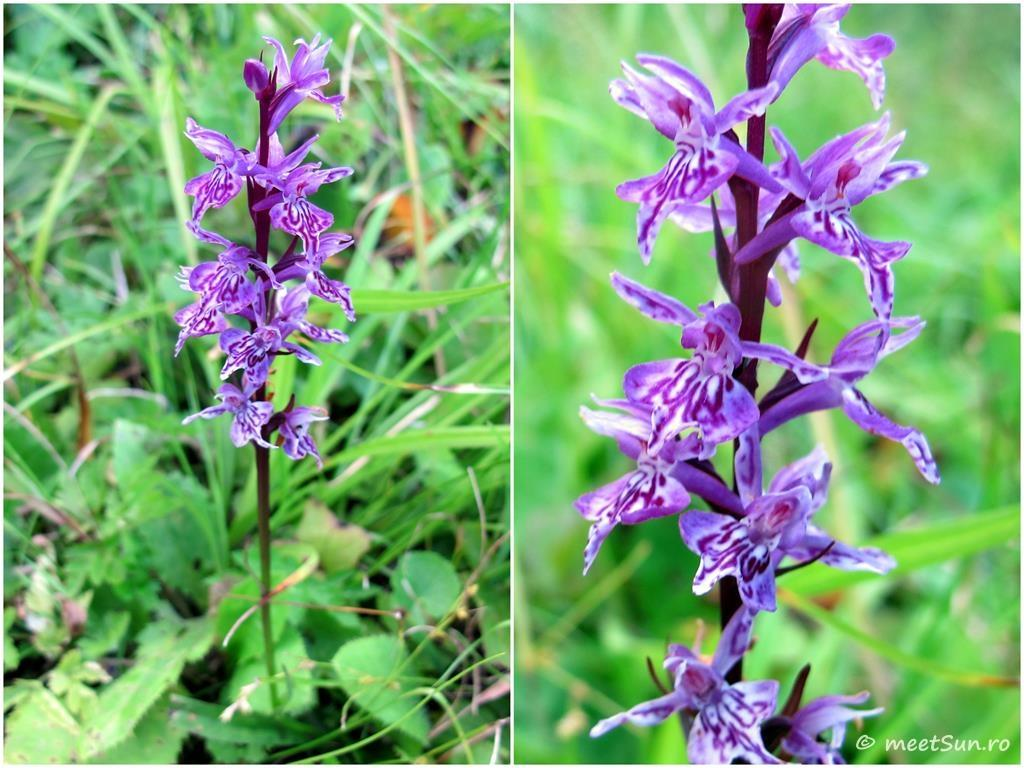 flori-mov-021-orhidee