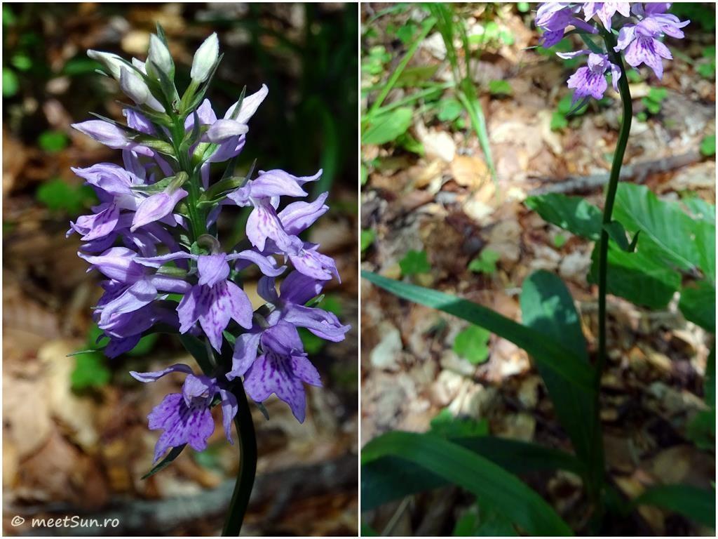 flori-mov-024-orhidee