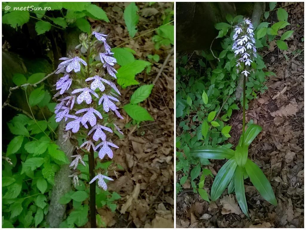 flori-mov-025-orhidee