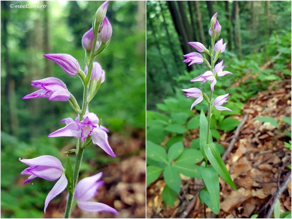 flori-mov-026-orhidee