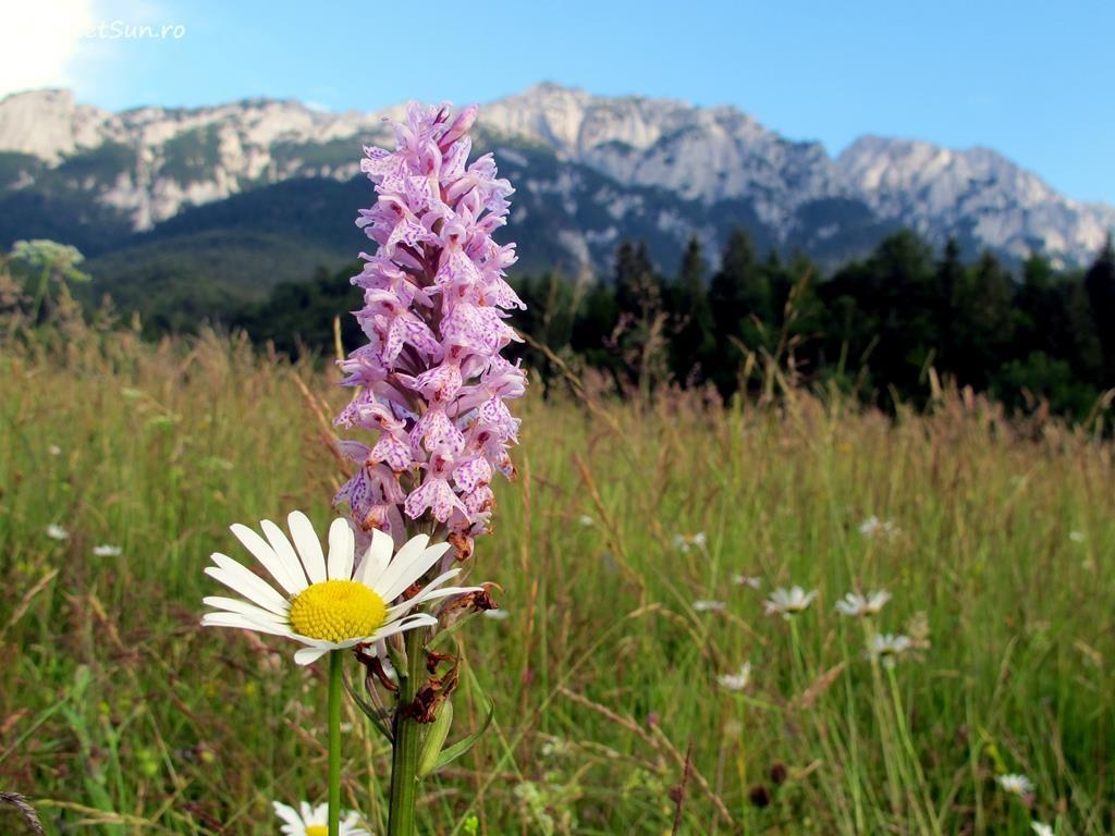flori-roz-044-orhidee