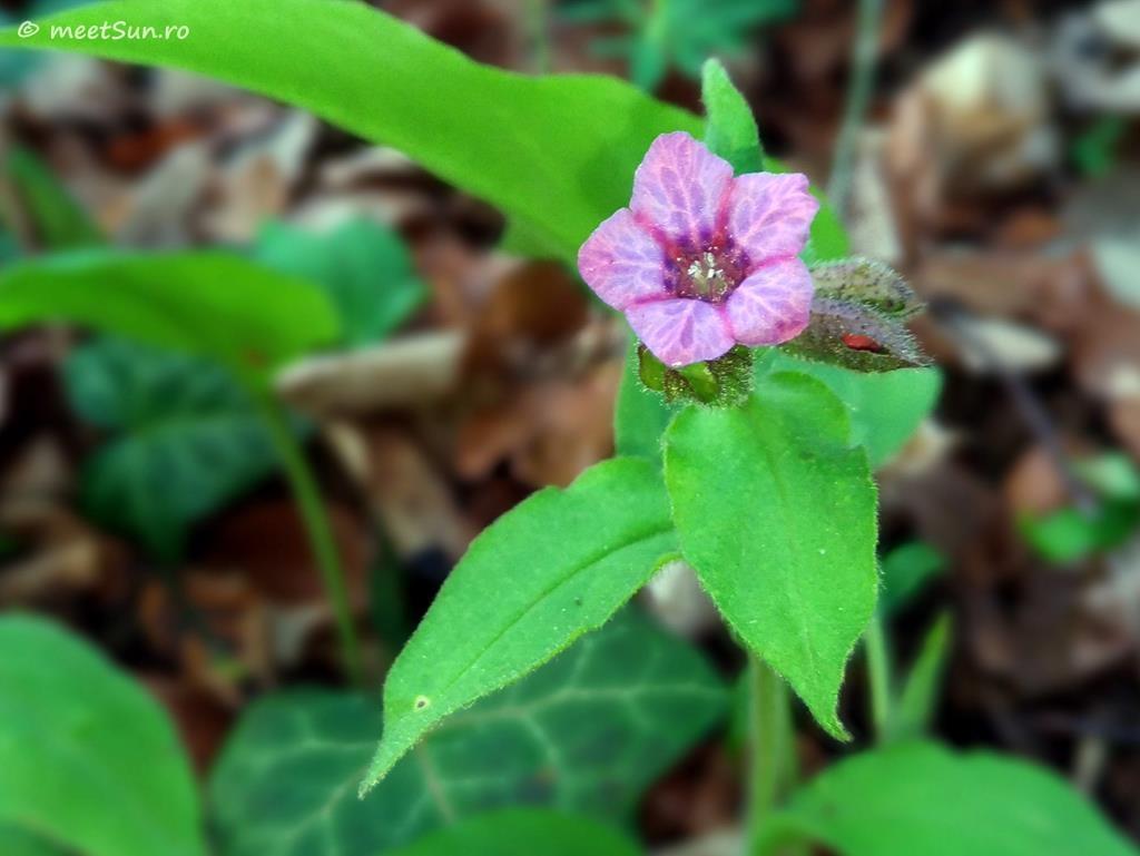 flori-roz-054