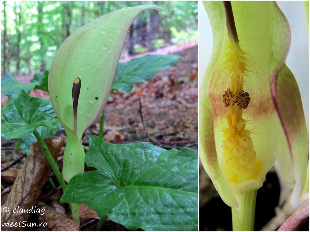13-flori-verzi-rodul-pamantului
