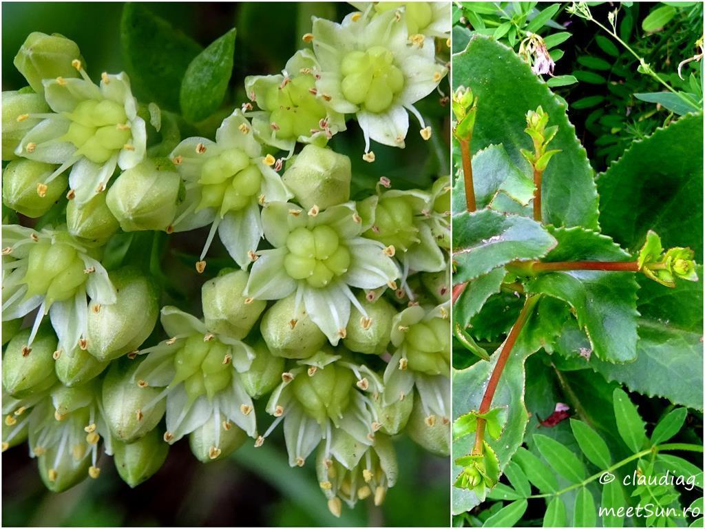 21.1-flori-verzi-iarba-grasa