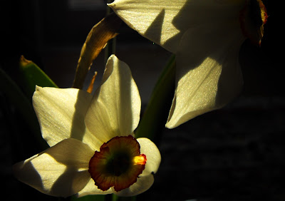 rp_Narcise.jpg