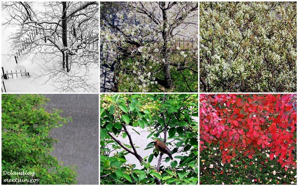 Viata de copac de primavara pana iarna, cu flori si pasari, cu ninsori si ploi.